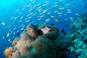 Villa Sole Rossu diving_300_200